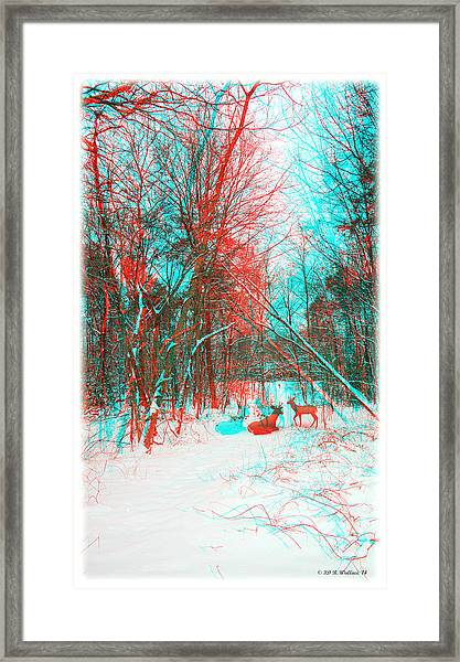 Wooded Path - Use Red And Cyan Filtered 3d Glasses Framed Print