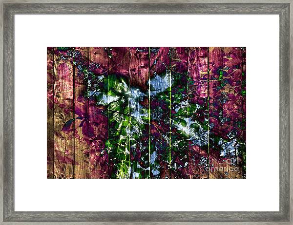 Wooden Planks And Sunlight Streaming Through Leaves II Framed Print