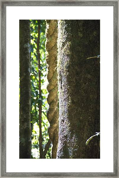 Wooden Ropes Framed Print by Debbie Cundy