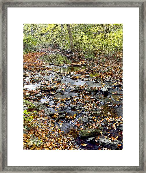 Woodland Brook In Fall Montgomery County Pennsylvania Framed Print