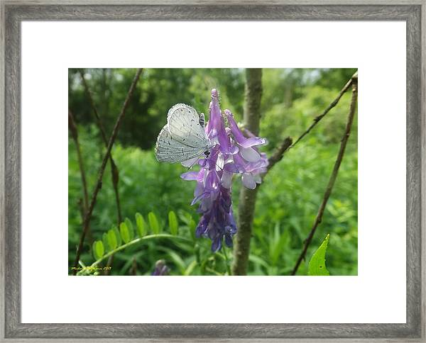 Woodland Butterfly Framed Print