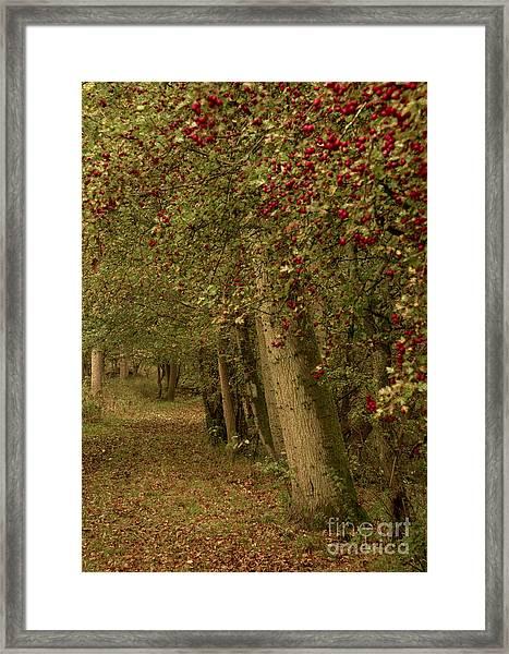 Woodland In Autumn Framed Print