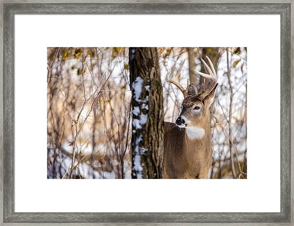Woodland Outlaw Framed Print