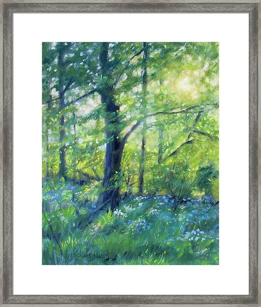 Woodland Sunset Framed Print