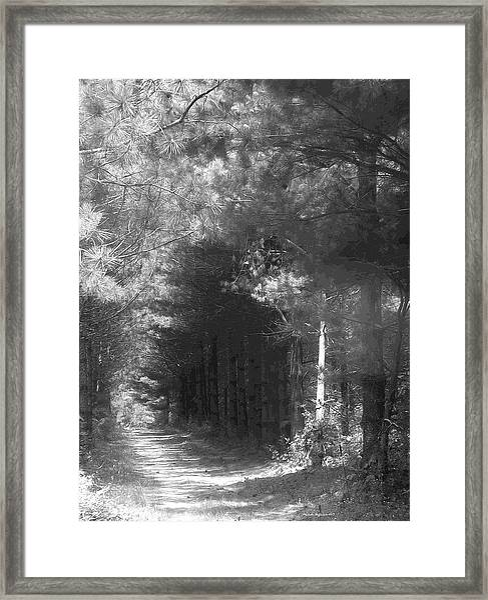 Woodland Tunnel Framed Print