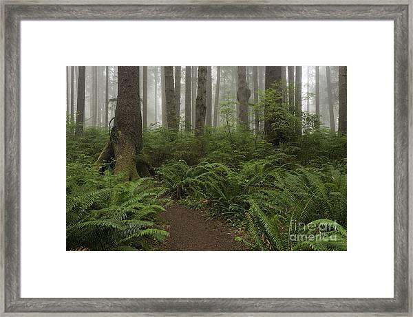 Woods Trail Framed Print