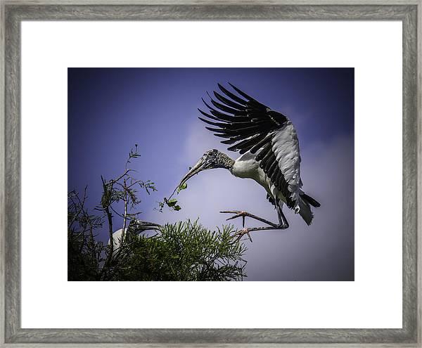 Woodstork Delicate Landing Framed Print