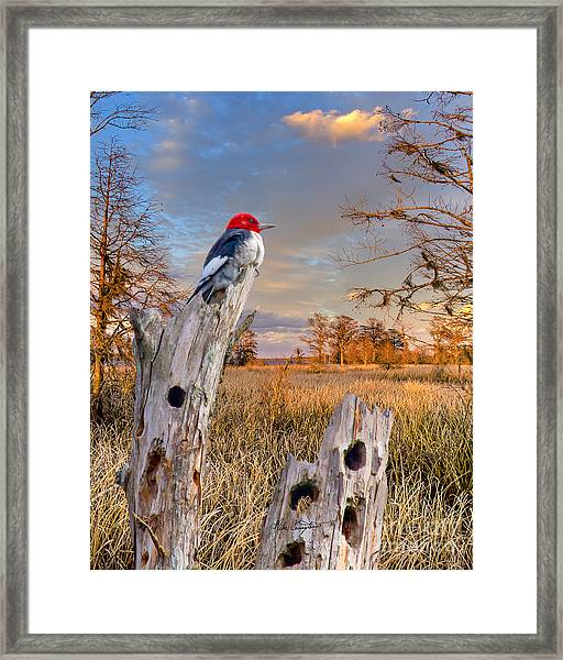 Woody In Paradise Framed Print