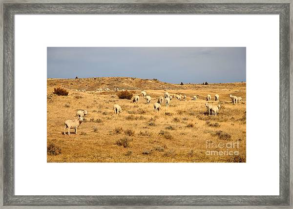 Wool You Sheep With Me Framed Print