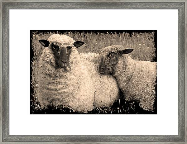 Wooly Love Framed Print