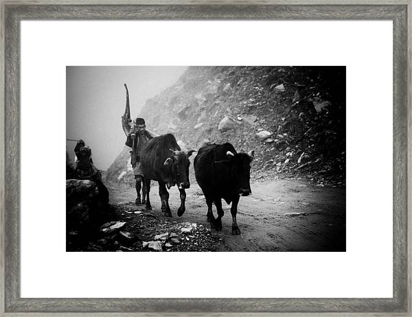 Framed Print featuring the photograph Work Hard Tamang People Langtang Nepal by Raimond Klavins