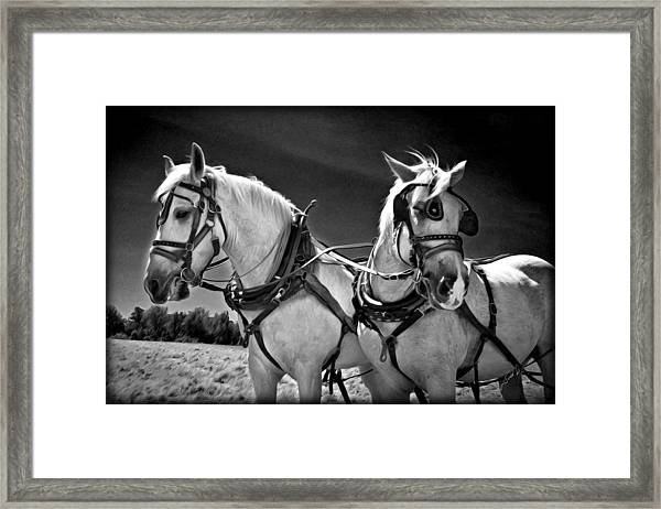 Framed Print featuring the photograph Workhorses by Williams-Cairns Photography LLC