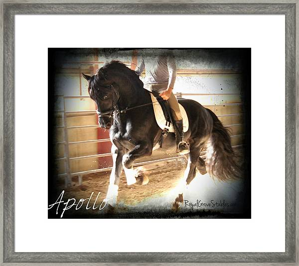 Working Friesain Framed Print
