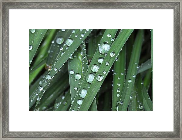 Wow Look At Those Droplets Framed Print