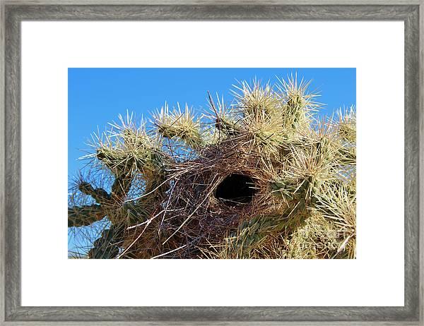 Wrens Nest In Teddy Bear Cholla Framed Print