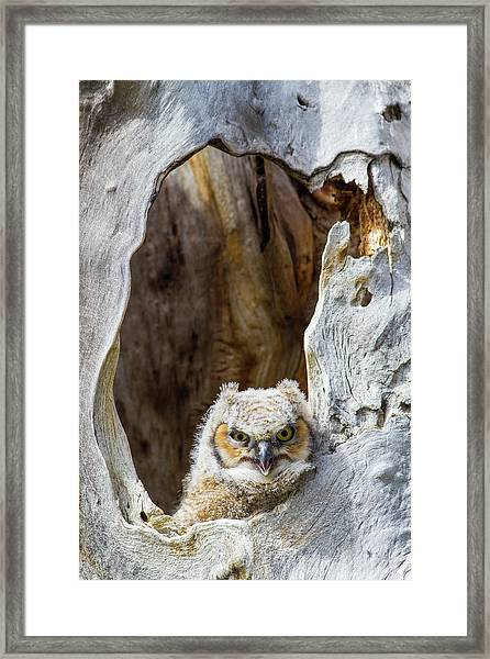 Wyoming, Lincoln County, Great Horned Framed Print