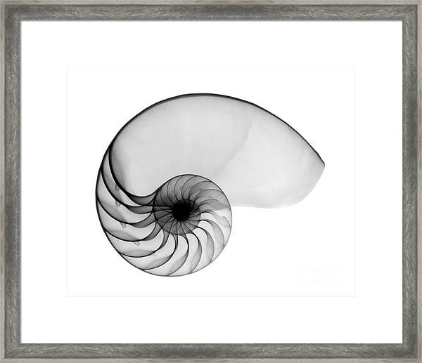 X-ray Of Nautilus Framed Print