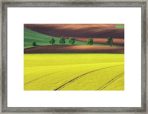Yellow Framed Print by Ales Komovec
