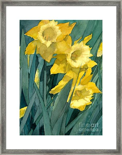 Watercolor Painting Of Blooming Yellow Daffodils Framed Print