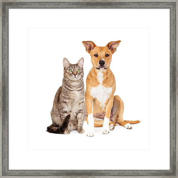 Yellow Dog And Tabby Cat Framed Print