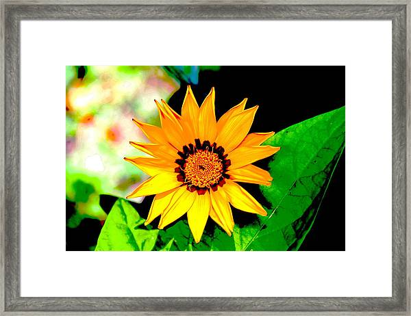 Yellow Flower Framed Print by Carolyn Reinhart