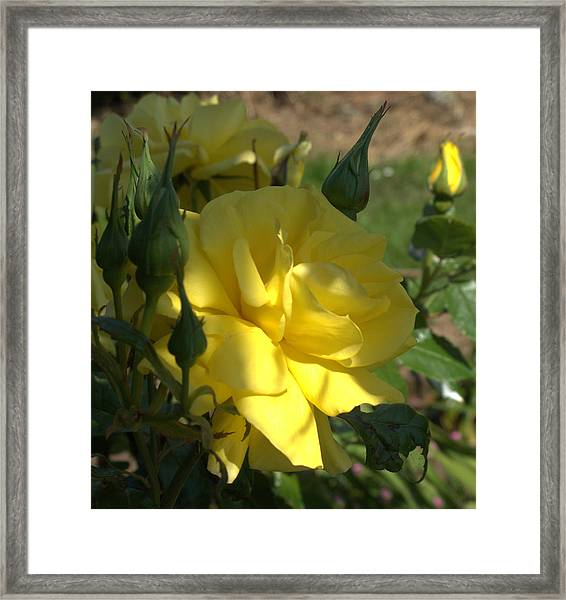 Yellow Grace Framed Print