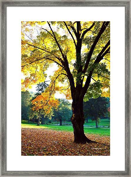 Yellow Highlights Framed Print