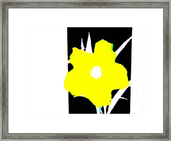 Yellow Jack Framed Print