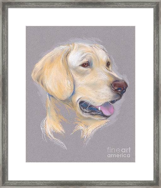 Yellow Labrador Retriever Portrait Framed Print