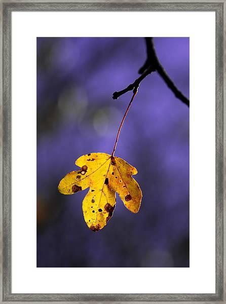 Yellow Leaf Framed Print