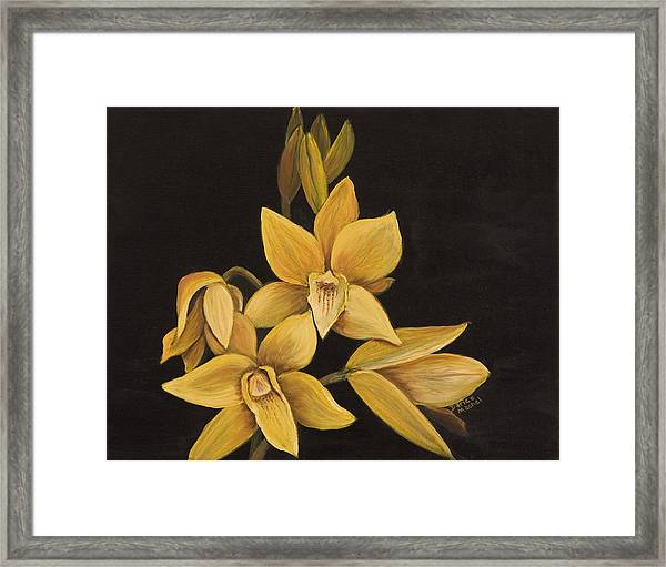 Yellow Orchid Framed Print