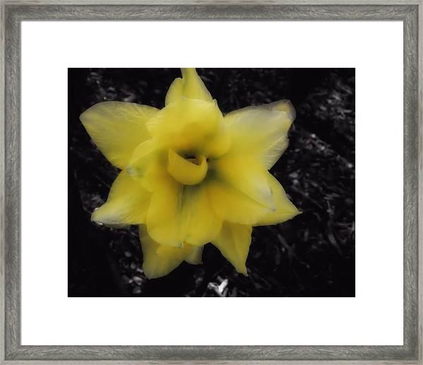 Yellow Parrot Tulip Framed Print