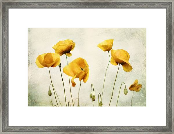 Yellow Poppy Photography - Yellow Poppies - Yellow Flowers - Olive Green Yellow Floral Wall Art Framed Print