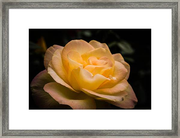 Yellow Ray Of Sunshine Framed Print