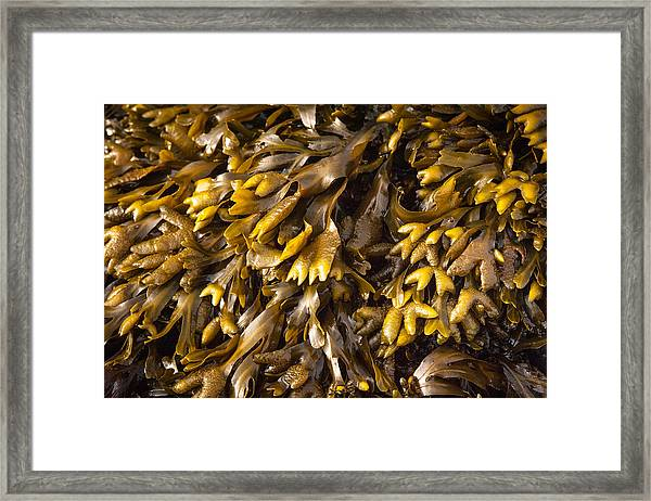 Yellow Sea Plant Framed Print