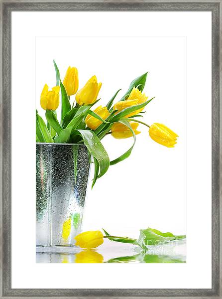 Yellow Spring Tulips Framed Print