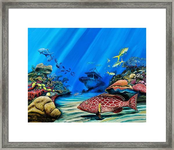 Yellowfin Grouper Wreck Framed Print