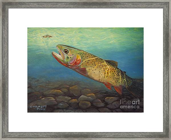 Yellowstone Cut Takes A Salmon Fly Framed Print