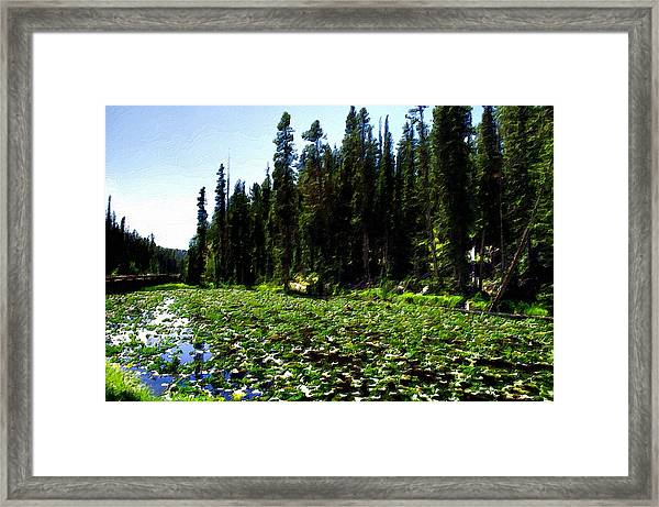 Yellowstone Lily Pads  Framed Print