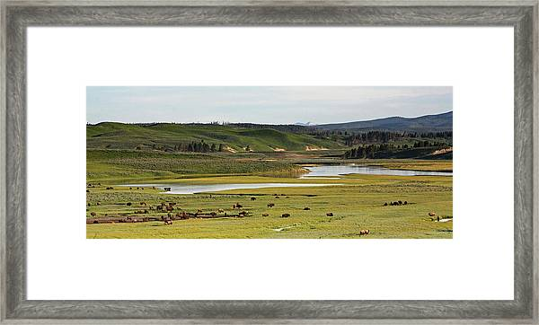 Yellowstone River In Hayden Valley In Yellowstone National Park Framed Print