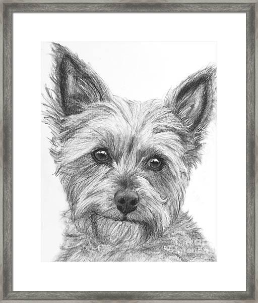 Yorkie Drawing Framed Print