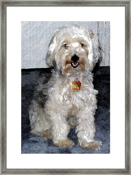 Yorkipoo Dog Framed Print by Olde Time  Mercantile
