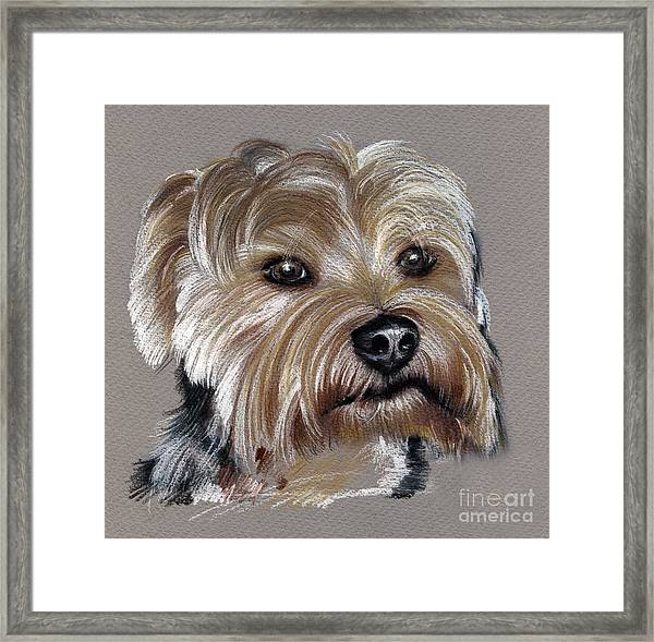 Yorkshire Terrier- Drawing Framed Print