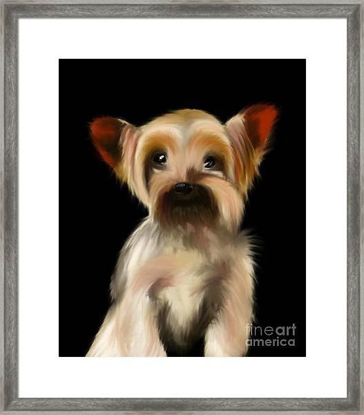 Yorkshire Terrier Pup Framed Print