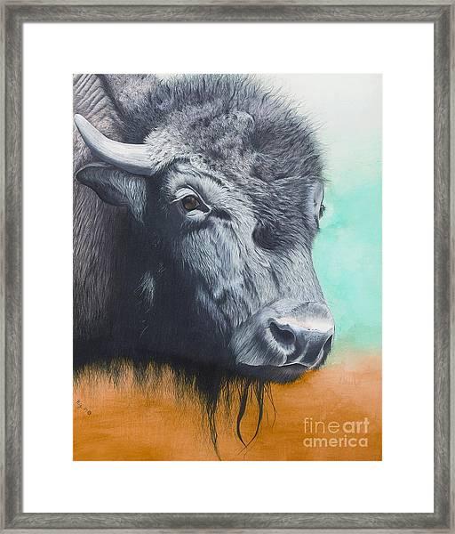 Young Bull Framed Print