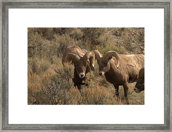 You Are In My Way Framed Print