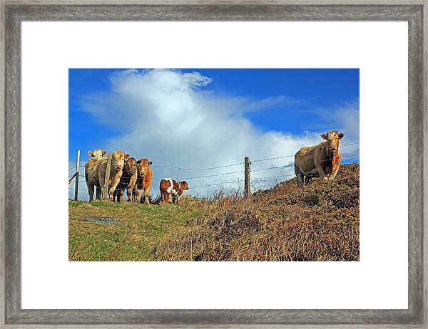 Youth In Defiance Framed Print