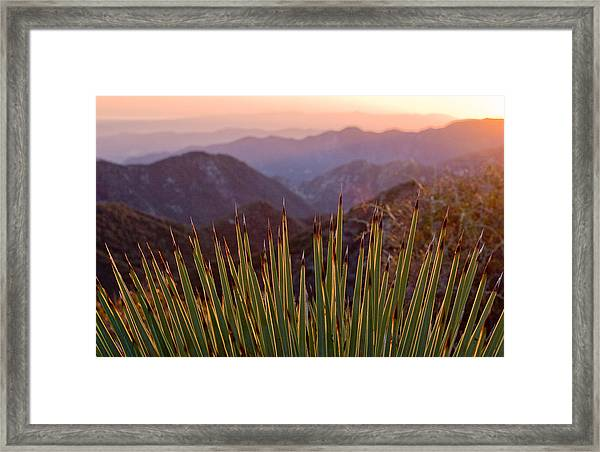 Yucca Spikes Framed Print