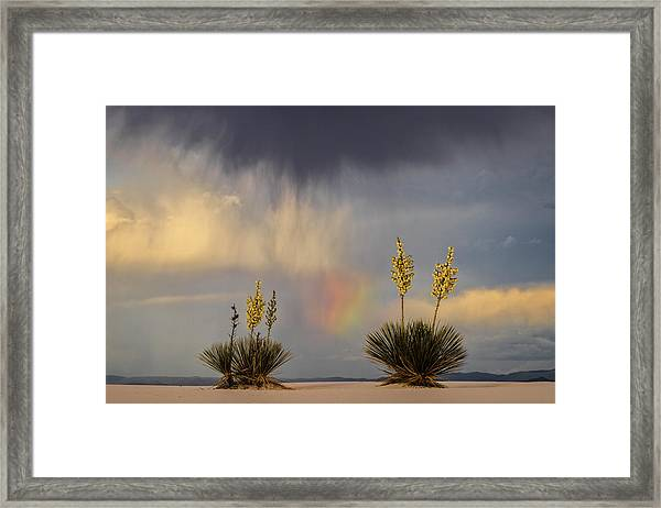 Yuccas, Rainbow And Virga Framed Print by Don Smith