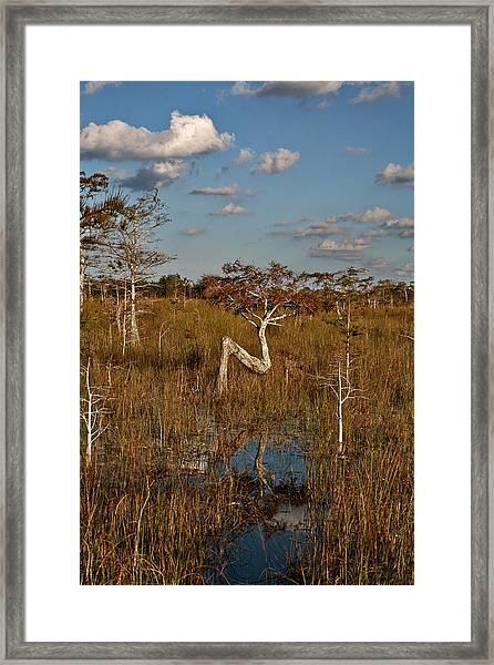 Z Tree Framed Print